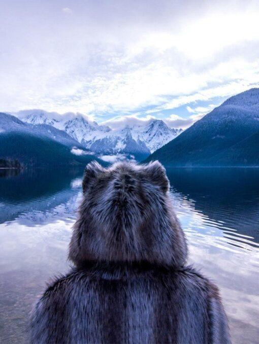 loup de la montagne